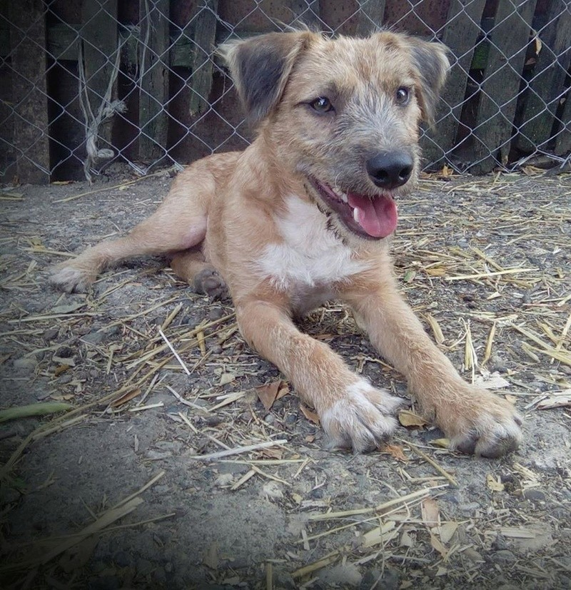 VICTOR un chien en grande souffrance - BULGARIE 14628212