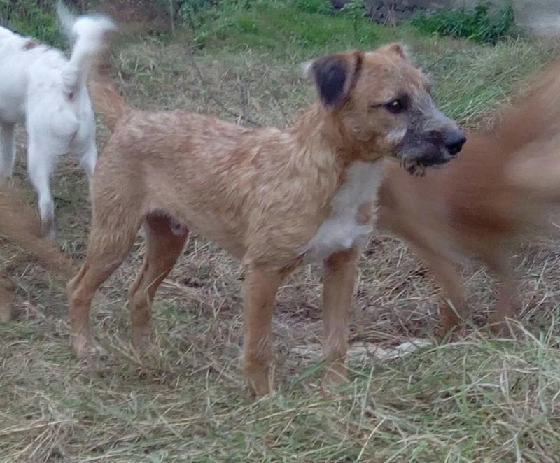 VICTOR un chien en grande souffrance - BULGARIE 14657610