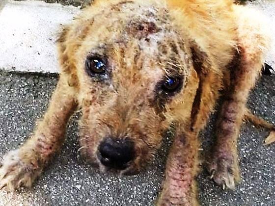 VICTOR un chien en grande souffrance - BULGARIE 4064ee10