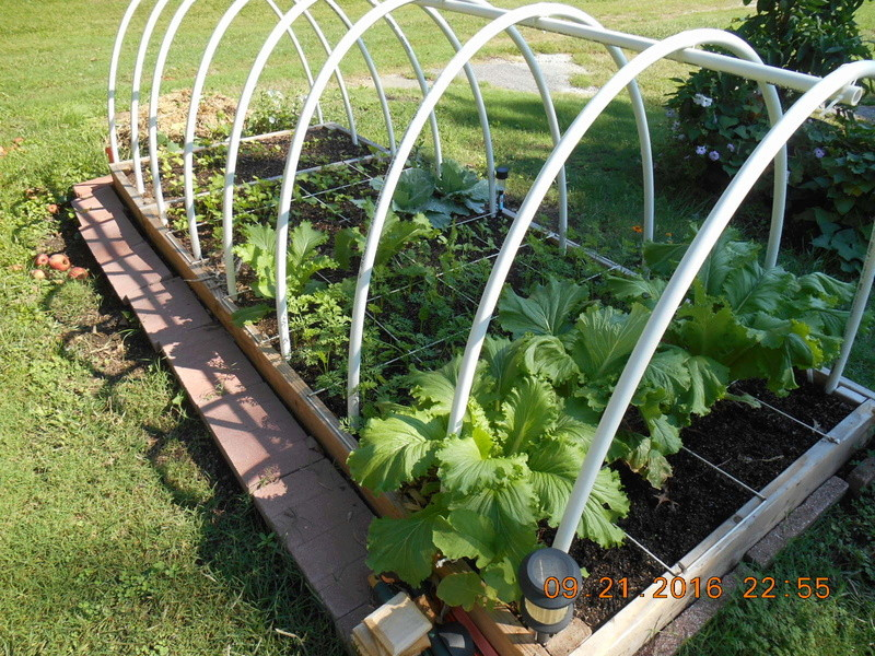 When is a great time to start a garden?  The Fall! Apple_11
