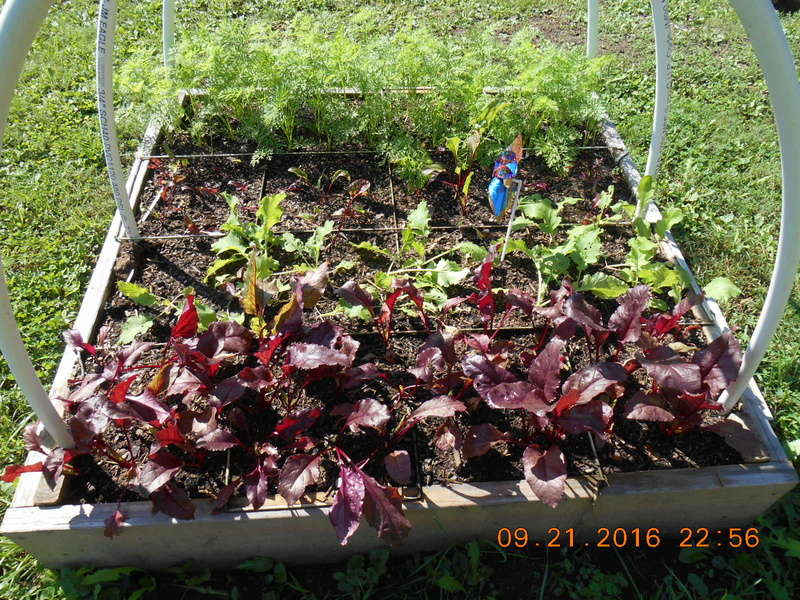 When is a great time to start a garden?  The Fall! Bools_10