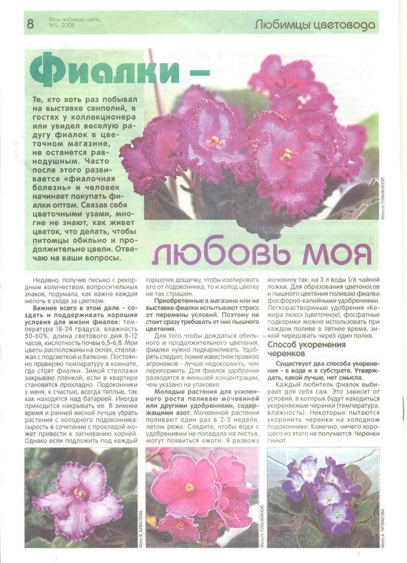 узамбарская фиалка или сенполия 0_6b6c10
