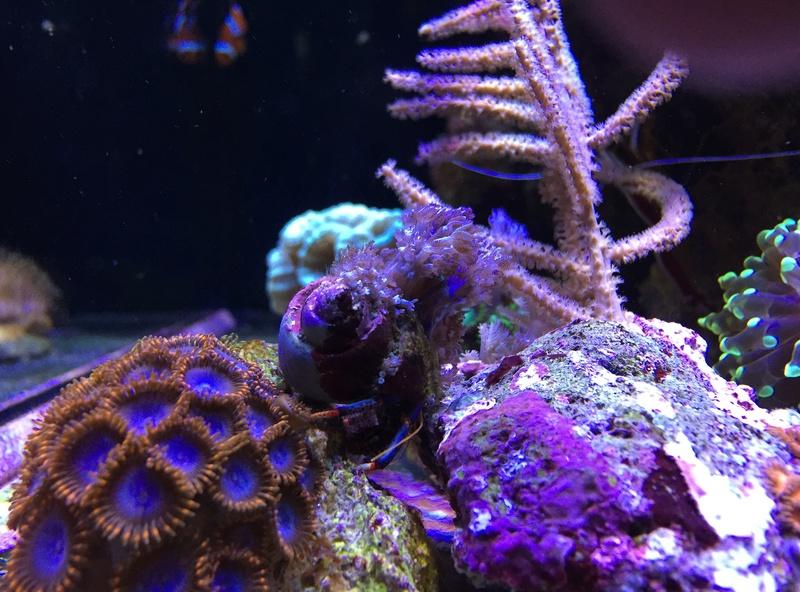 Reefer sebbordeaux  - Page 4 Image21