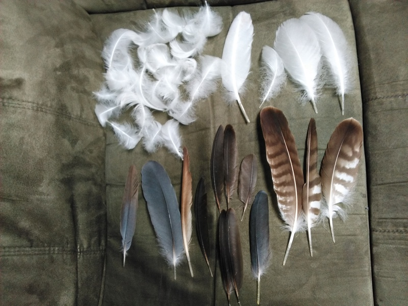Trouvailles de plumes Img_2013