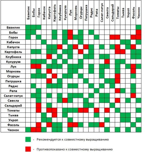 таблица совместимости и правильного «соседства» растений на огороде D457ec10