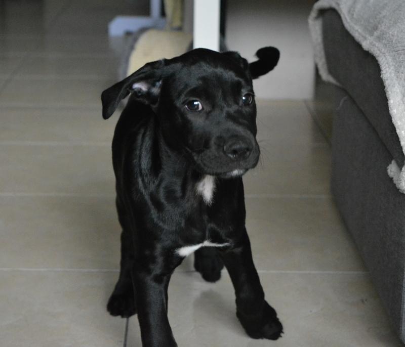 [Clos]Visite post adoption (chien) à Plescop pour Merlin Dsc_0065