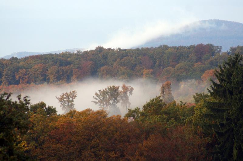 Paysages d'automne Img_3519