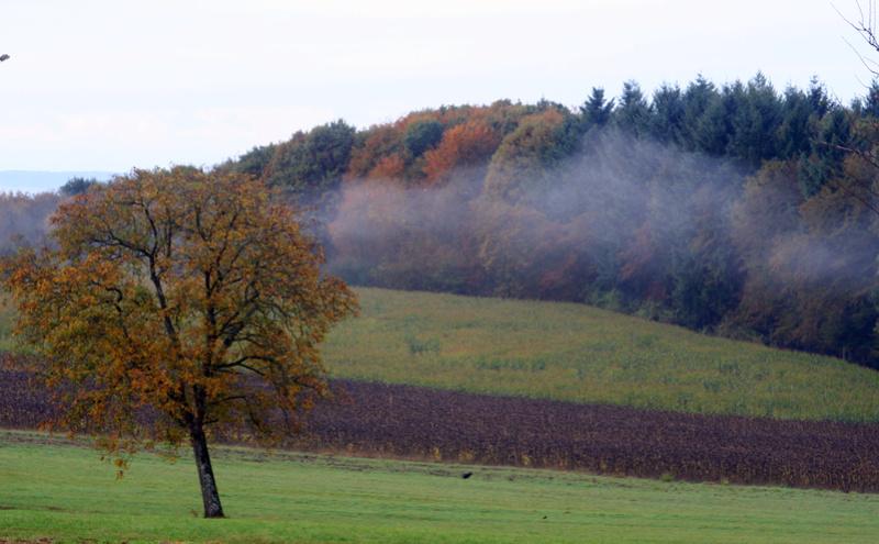 Paysages d'automne Img_3710
