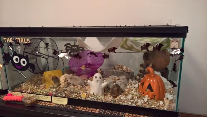 halloween tank and pop-up playground :) Wp_20149