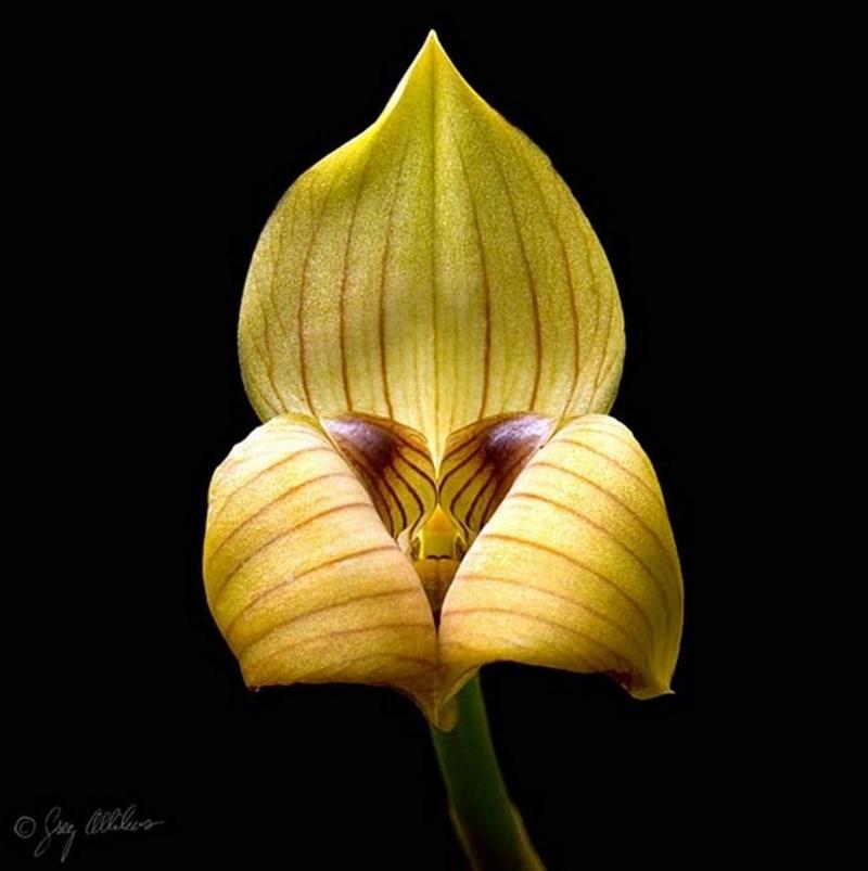 Les changements orchidophiles au fil des ans Rrrrrr10
