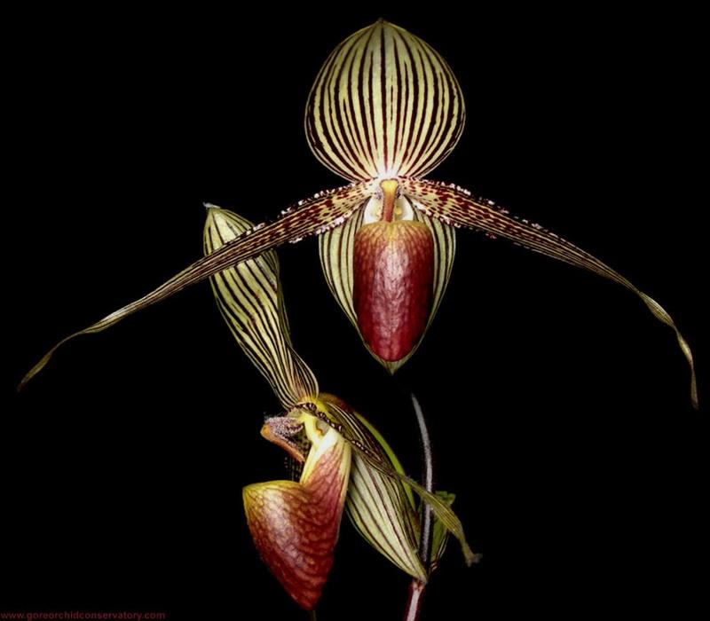 Les changements orchidophiles au fil des ans Tttttt10