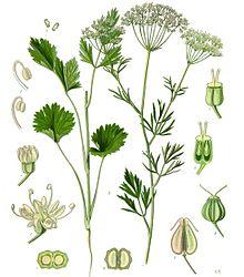 A - Herbs...... 220px-10