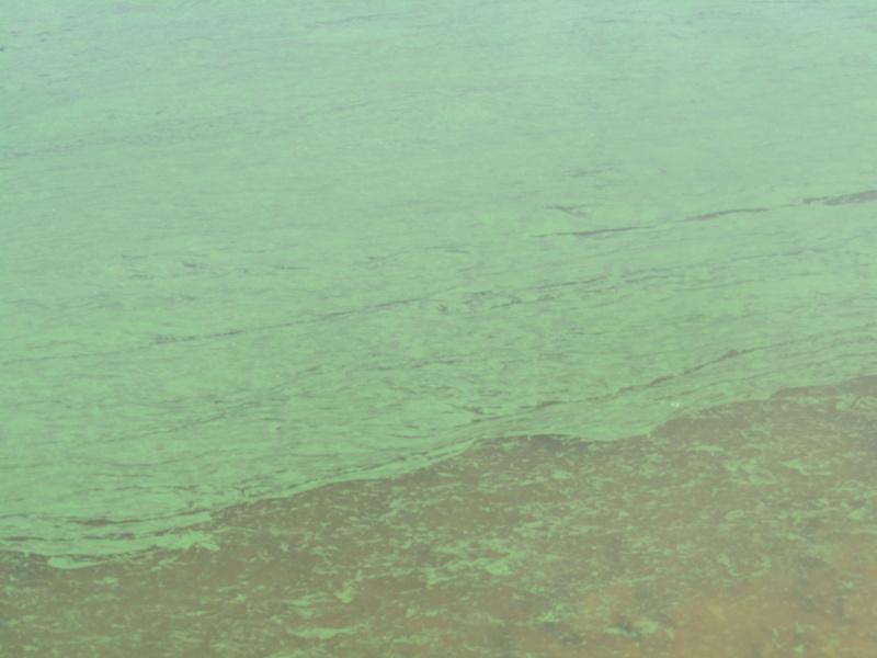 couche verte sur l'eaux   Img_0810