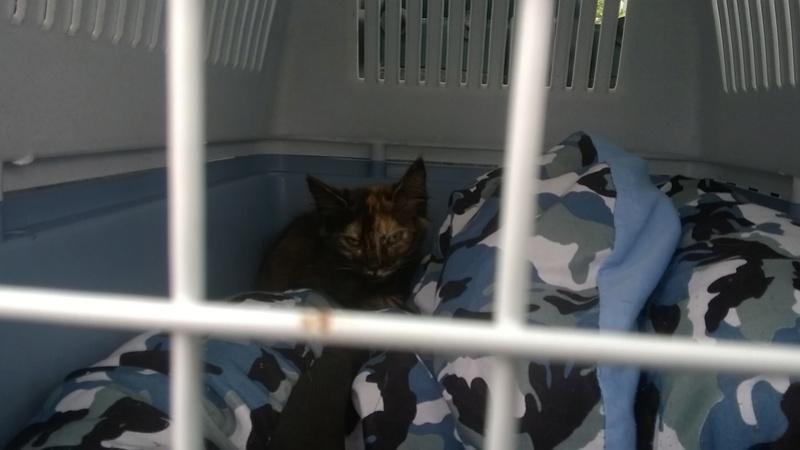 URGENT - Recherche Betton à Bruz pour 2 chatons de fourière le vendredi 16/9 Wp_20111