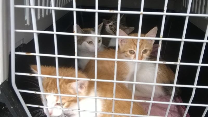 URGENT - Recherche Betton à Bruz pour 2 chatons de fourière le vendredi 16/9 Wp_20113