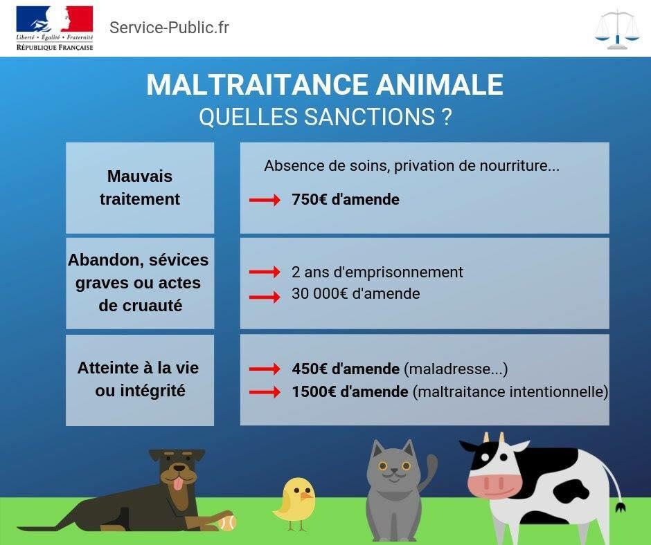maltraitance animale, agir 49323210