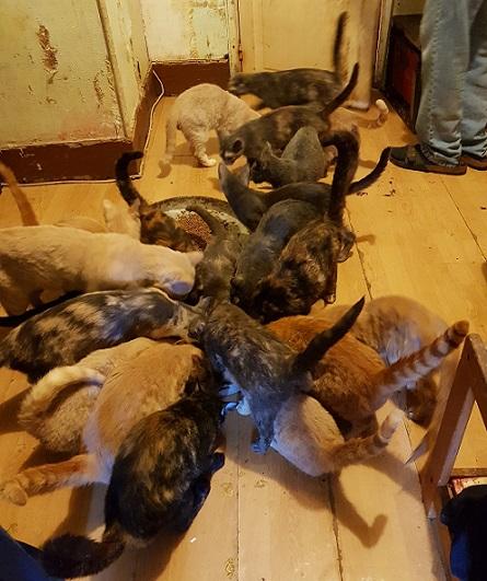 CAGNOTTE Aidez-nous à sortir les chats de la misère ! Carnau10