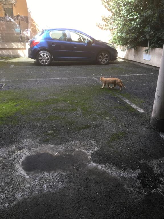 chats quartier jolimont Chat_r11