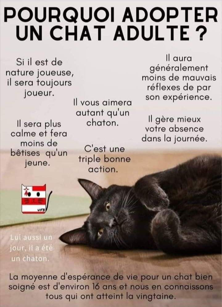 pourquoi adopter un chat adulte? Fb_img64