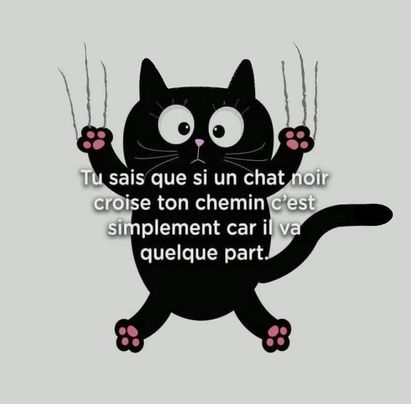 pourquoi adopter un chat adulte? Fb_img68
