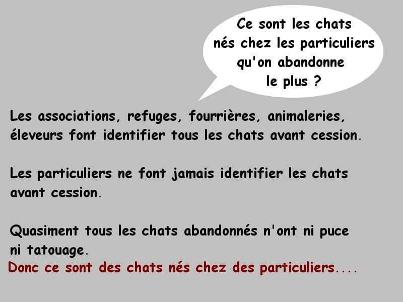 pourquoi adopter un chat adulte? Fb_img69