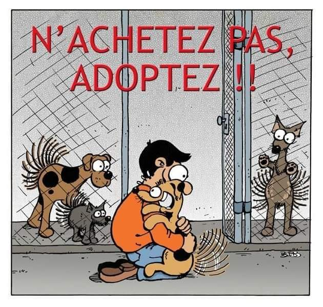 pourquoi adopter un chat adulte? Fb_img74