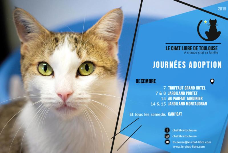[Adoptions] Samedi 14 et dimanche 15 décembre 2019 : Jardiland Montaudran Journz22