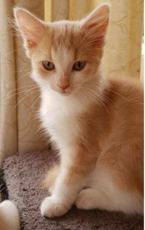 LION - LILA - SHINY (SUNNY adopté) Lila10