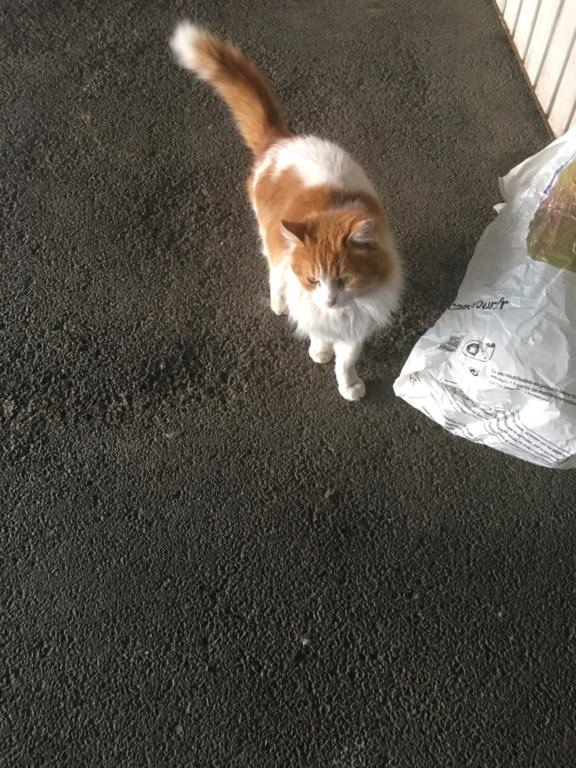 chats quartier jolimont Male_r11