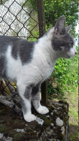 01/08/19 perdue chatte bleue blanche quartier arenes Oduna110
