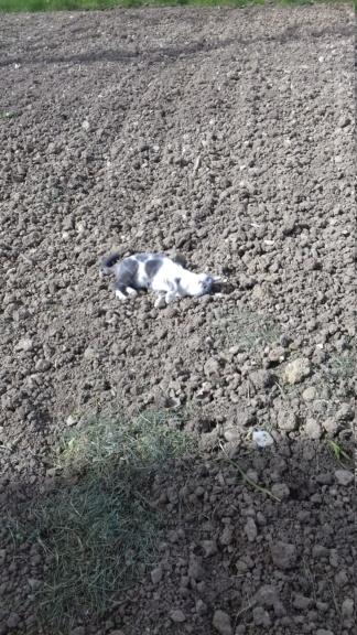 01/08/19 perdue chatte bleue blanche quartier arenes Oduna210
