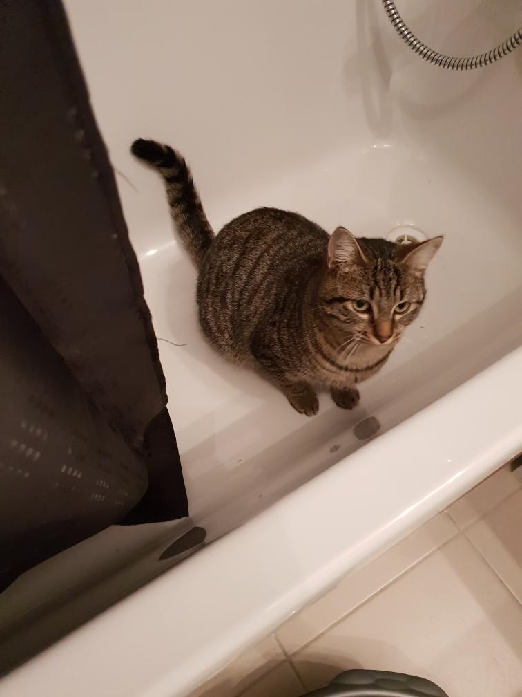 chaton canicat besoin FA Resize12