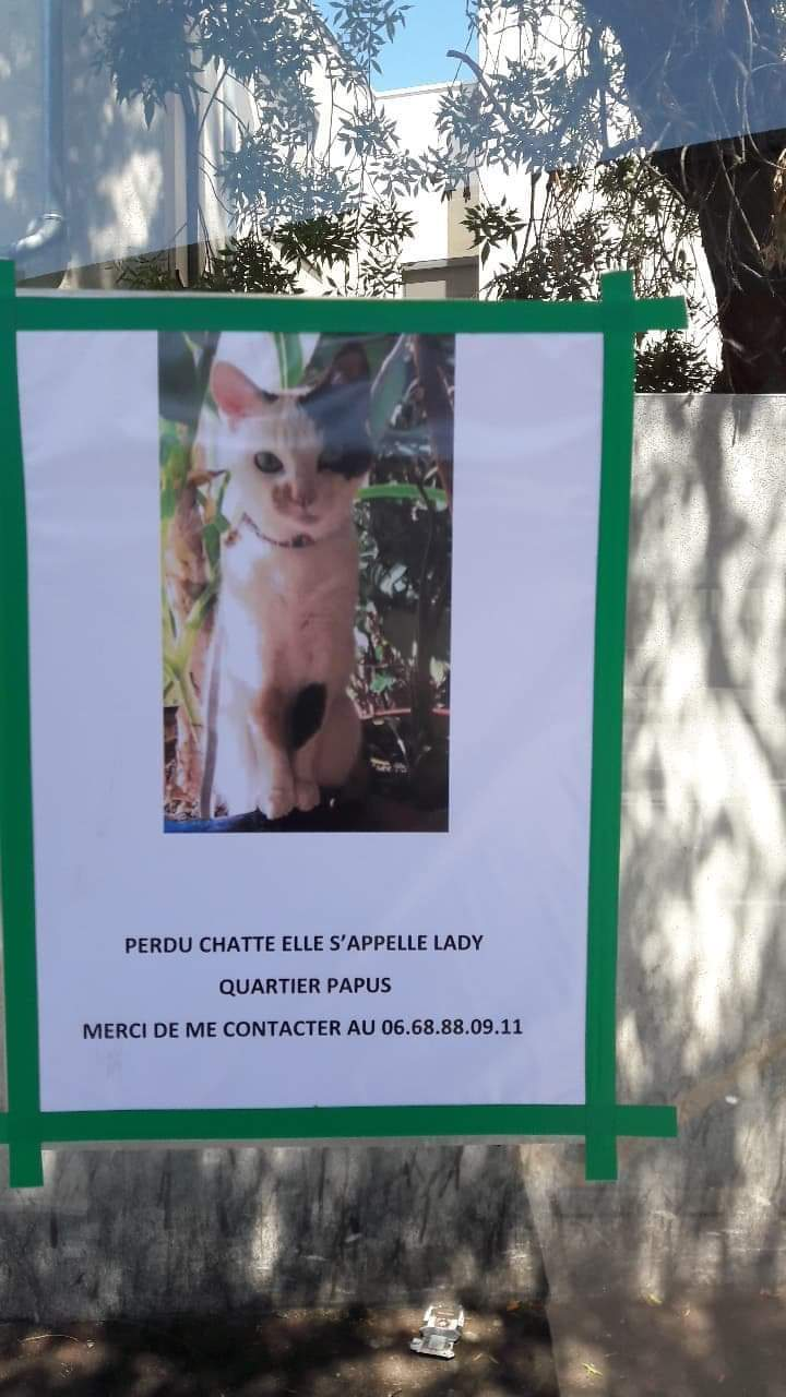 perdue chatte papus Resize17
