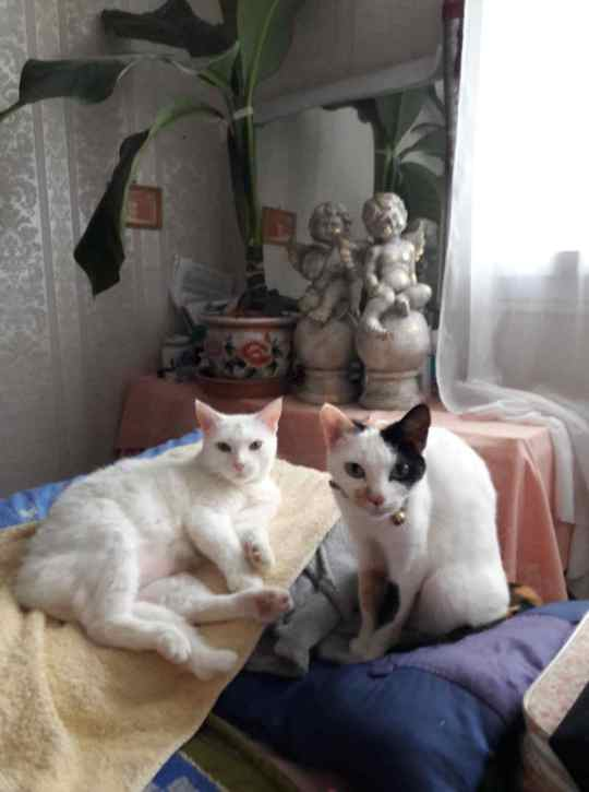 perdue chatte papus Resize19