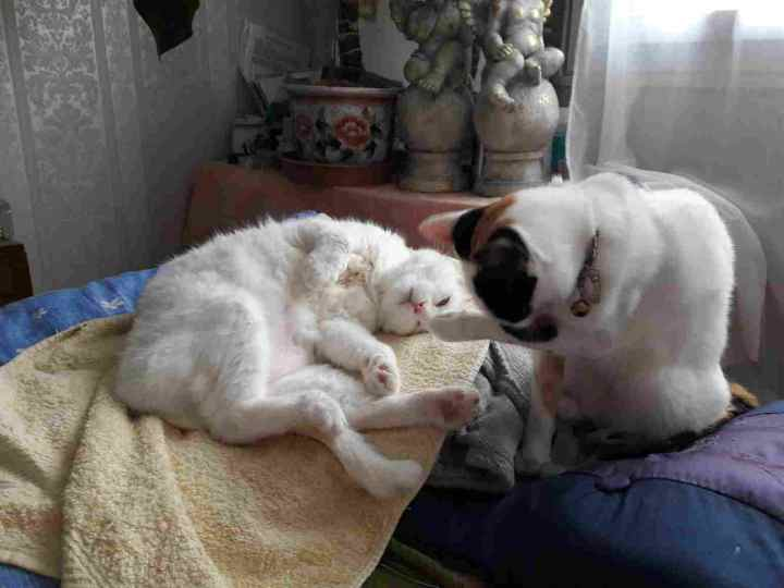 perdue chatte papus Resize21