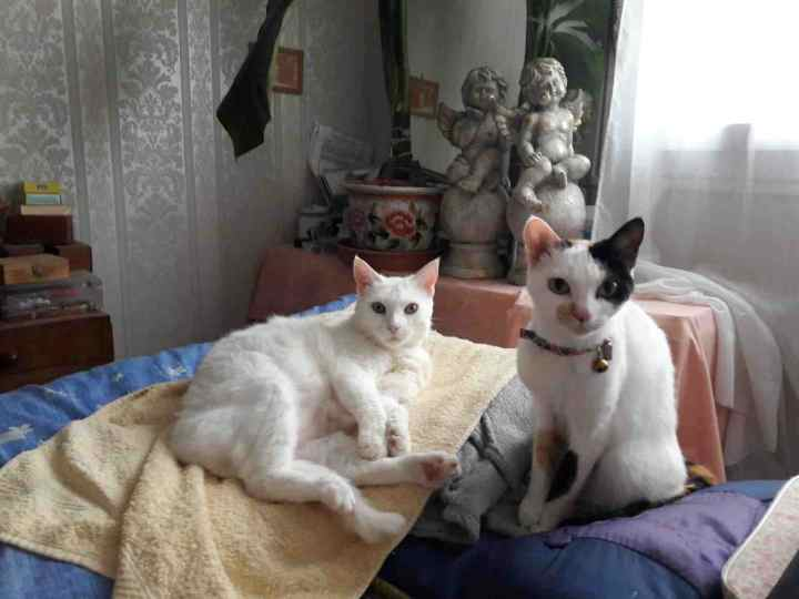 perdue chatte papus Resize22