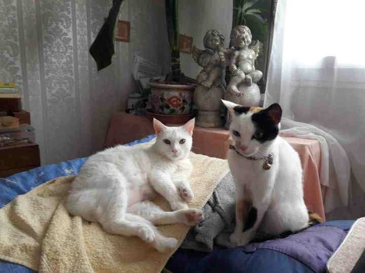 perdue chatte papus Resize24