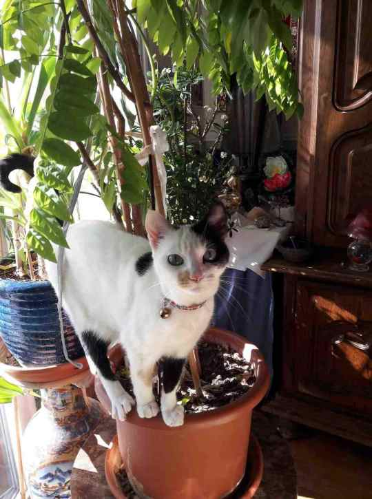 perdue chatte papus Resize25