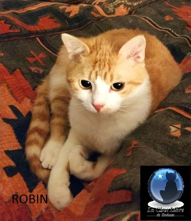 [Adoptions] Samedi 5 et dimanche 6 juin 2021 à Truffaut Colomiers  Robin-10