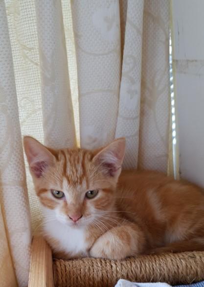 LION - LILA - SHINY (SUNNY adopté) Sunny10