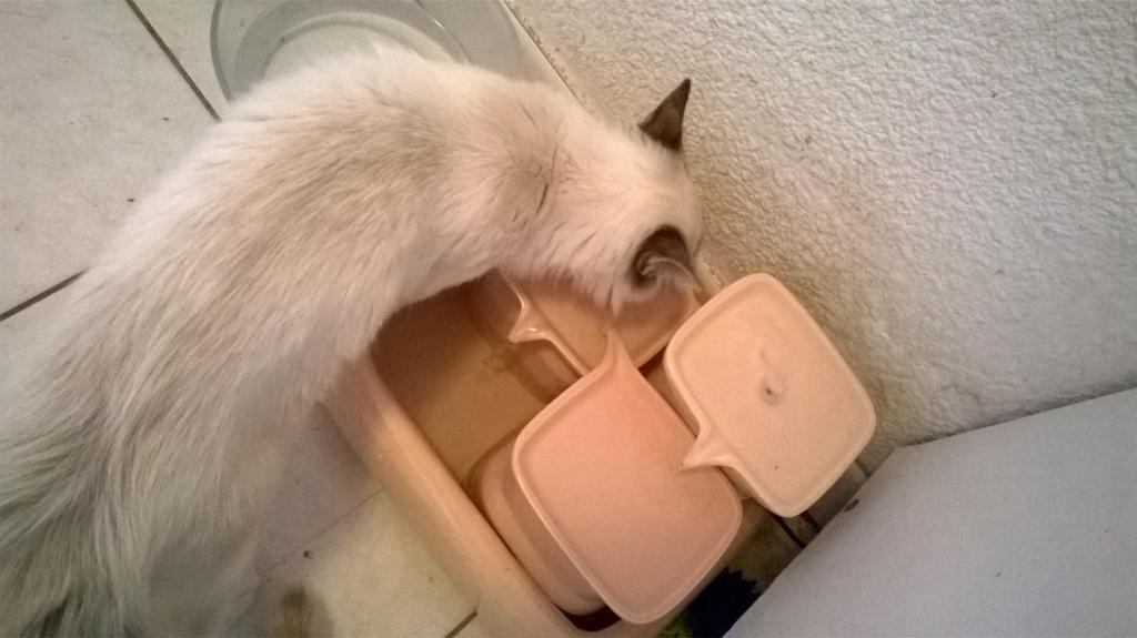 Achetez une fontaine à eau en céramique : 12% nous sont reversés par Miaustore Wp_20128