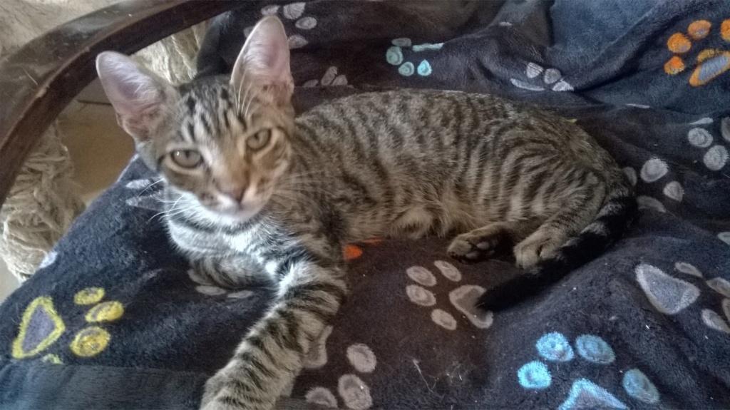 OLAWYN  02/11/19 en accueil en vue d'adoption Wp_20160