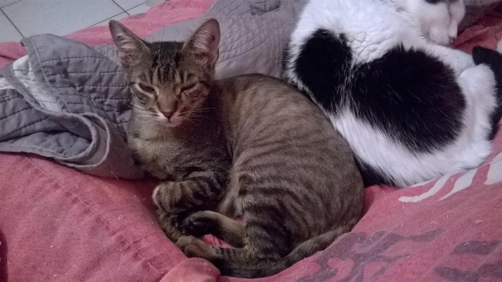 OLAWYN  02/11/19 en accueil en vue d'adoption Wp_20180