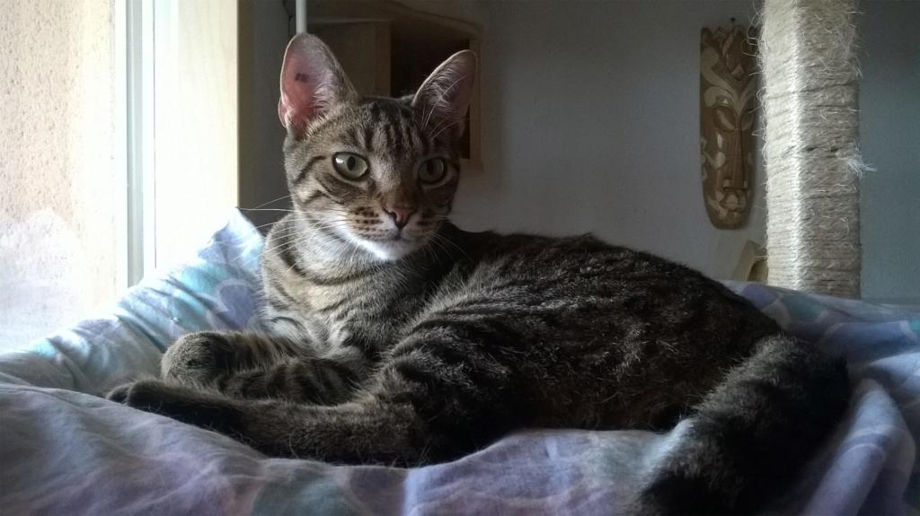 OLAWYN  02/11/19 en accueil en vue d'adoption Wp_20285