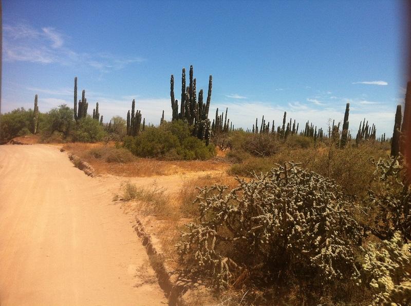 Mexique-Baja California Baja1610