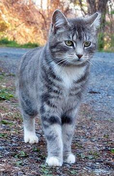 Sunlitcastiel's Kitties Ee541411