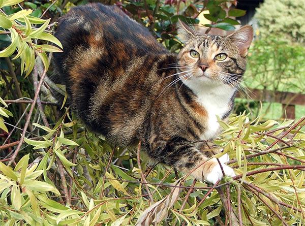 Sunlitcastiel's Kitties Image12
