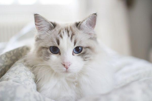Sunlitcastiel's Kitties Image13