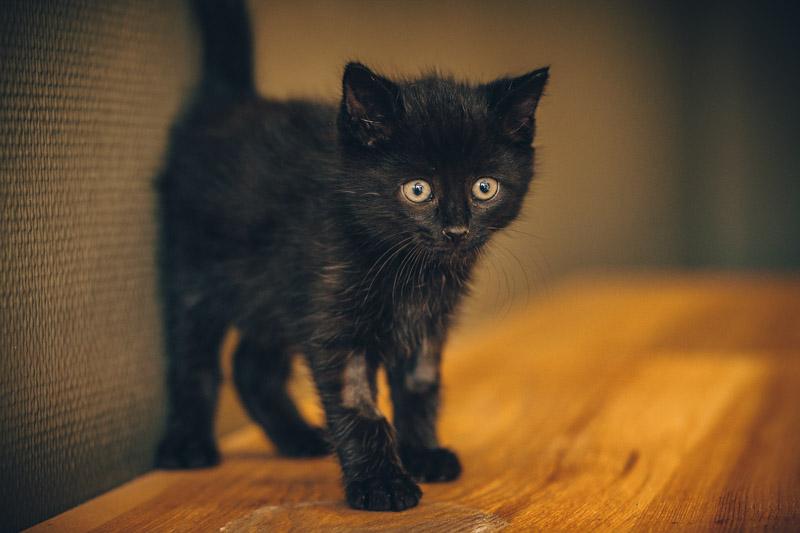 moti - MOTI, chaton noir, poils mi-longs, né le 15/08/16 Img_8316