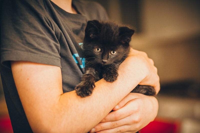 moti - MOTI, chaton noir, poils mi-longs, né le 15/08/16 Img_8415